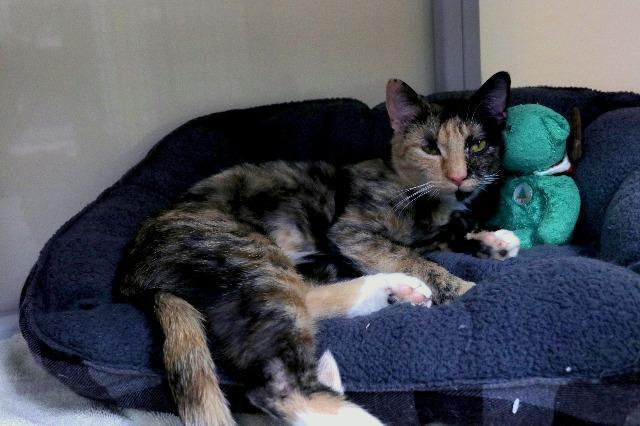 My name is Oprah and I am ready for adoption. Learn more about me!