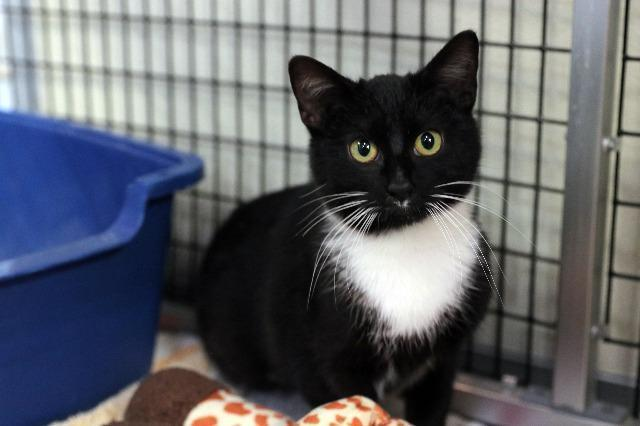 My name is Ricki Lake and I am ready for adoption. Learn more about me!