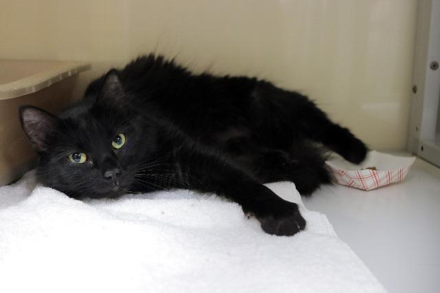 My name at SAFE Haven was Jane Lynch and I was adopted!