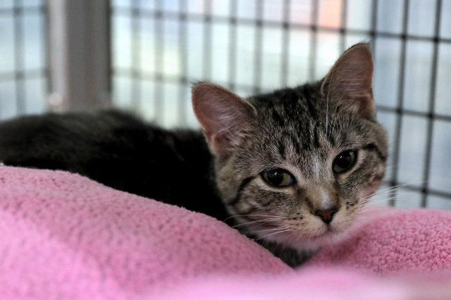 My name at SAFE Haven was Harmonie and I was adopted!