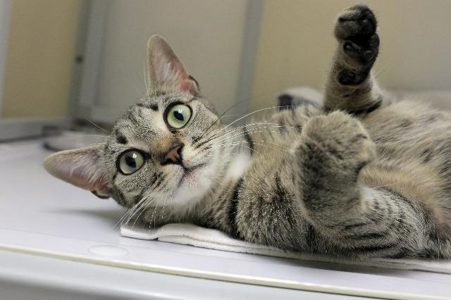 My name at SAFE Haven was Katherine and I was adopted!