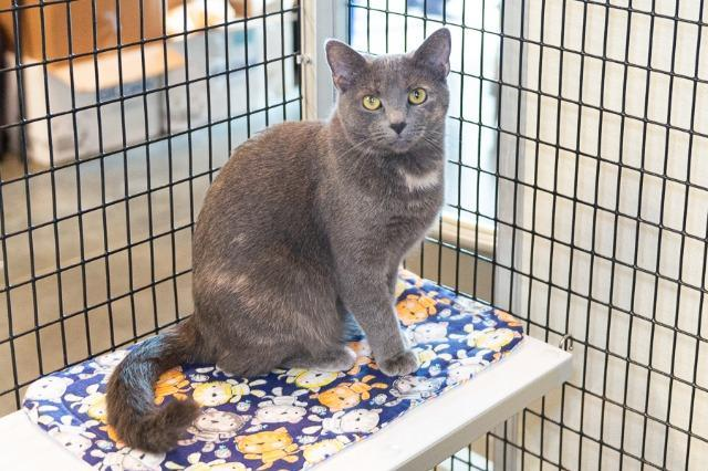 My name is Misty Rose and I am ready for adoption. Learn more about me!