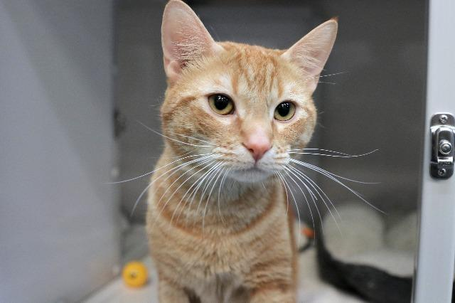 My name is Sunset and I am ready for adoption. Learn more about me!