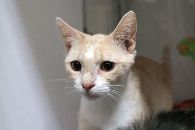 My name at SAFE Haven was Polliwog and I was adopted!