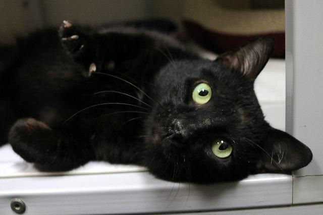 My name at SAFE Haven was Kelvin and I was adopted!