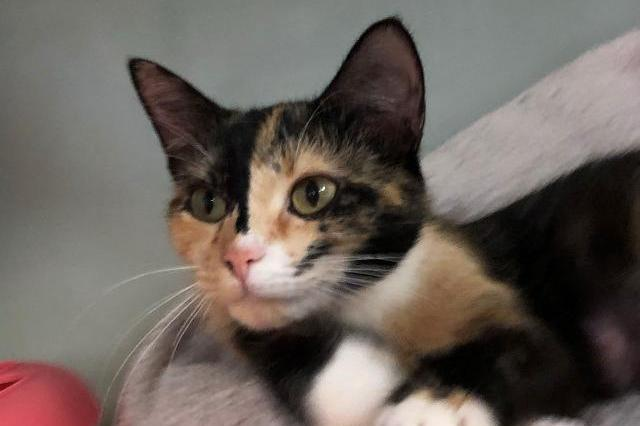 My name at SAFE Haven was Gale and I was adopted!