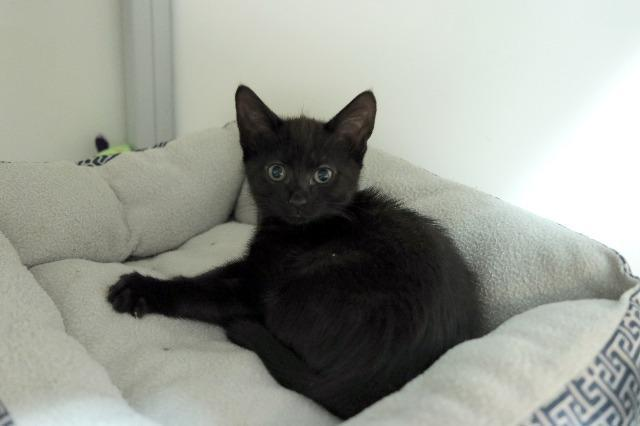 My name at SAFE Haven was Flurry and I was adopted!