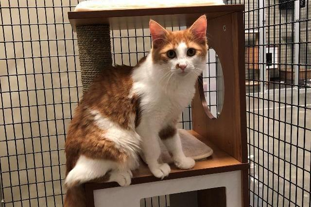 My name at SAFE Haven was Minuet and I was adopted!