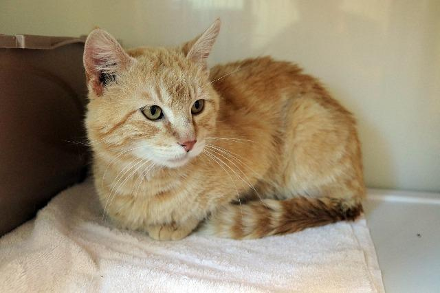 My name is Jim Dear and I am ready for adoption. Learn more about me!