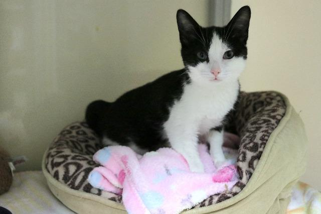 My name at SAFE Haven was Perdita and I was adopted!
