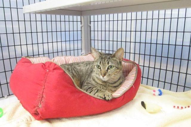 My name at SAFE Haven was Fields and I was adopted!
