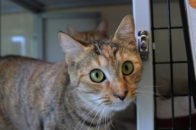 My name at SAFE Haven was Mary Marvel and I was adopted!