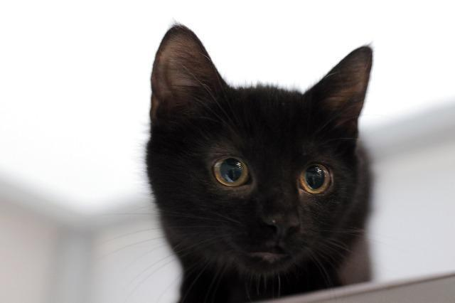 My name at SAFE Haven was Petra Tork and I was adopted!