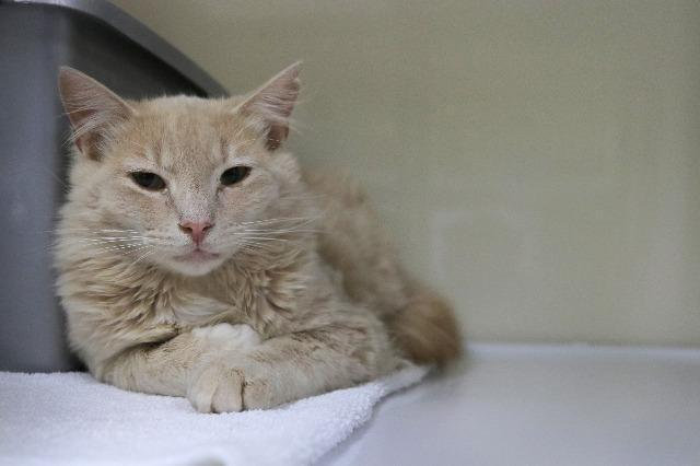 My name is Rococo and I am ready for adoption. Learn more about me!