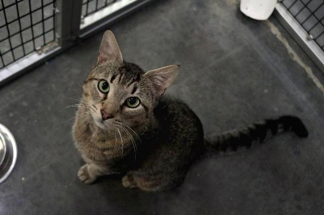 My name at SAFE Haven was Baritone and I was adopted!