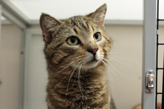 My name is Adagio and I am ready for adoption. Learn more about me!
