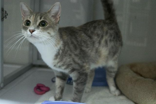 My name at SAFE Haven was Bright Blush and I was adopted!