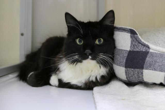 My name at SAFE Haven was Oreo Blizzard and I was adopted!