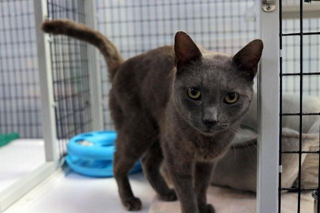 My name at SAFE Haven was Stratus and I was adopted!