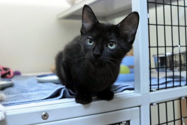 My name at SAFE Haven was Tadpole and I was adopted!