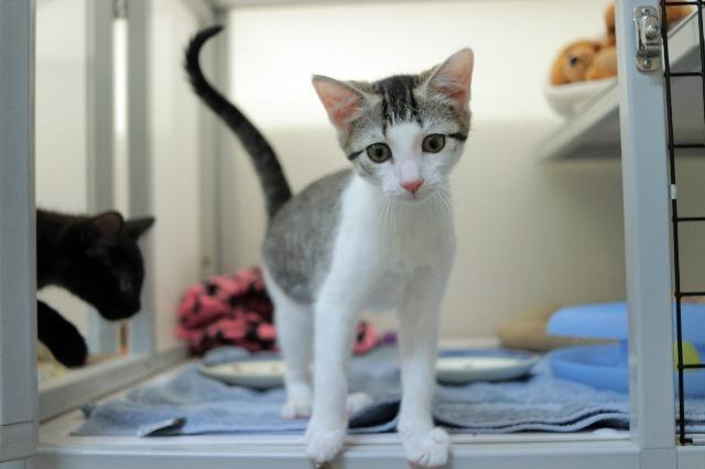 My name at SAFE Haven was Water Lily and I was adopted!