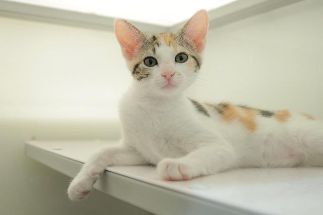 My name at SAFE Haven was Ladybug and I was adopted!