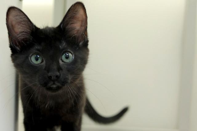 My name at SAFE Haven was Butterfly and I was adopted!