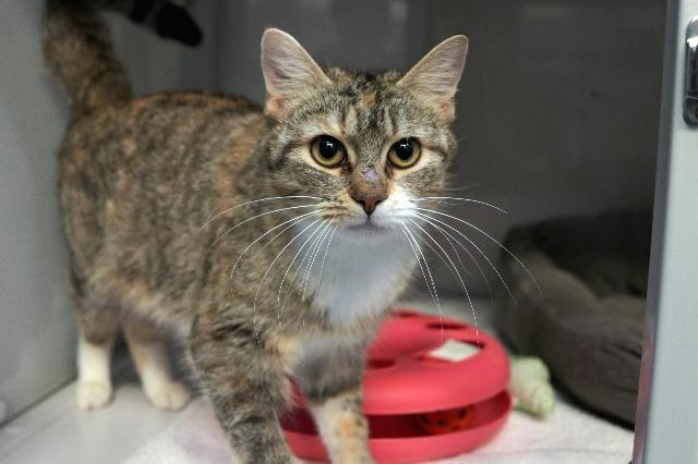 My name at SAFE Haven was Cissie and I was adopted!