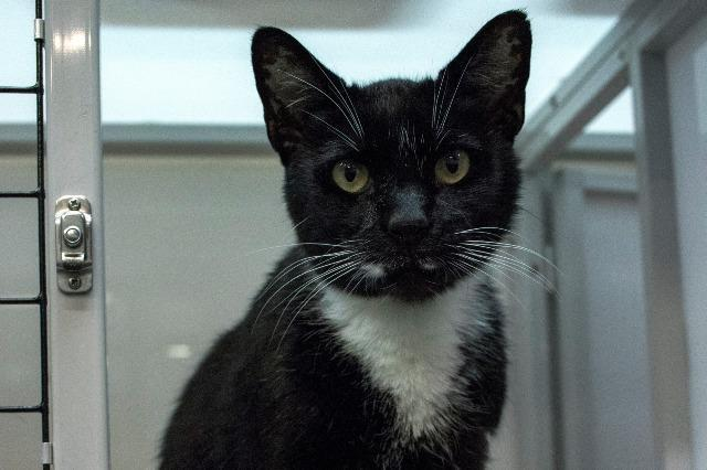 My name at SAFE Haven was Motif and I was adopted!