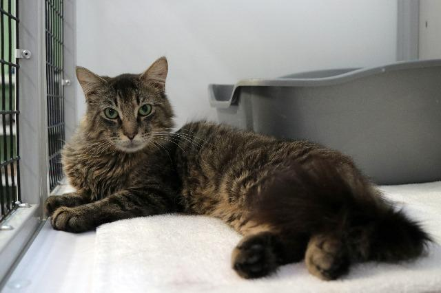 My name at SAFE Haven was Madrigal and I was adopted!