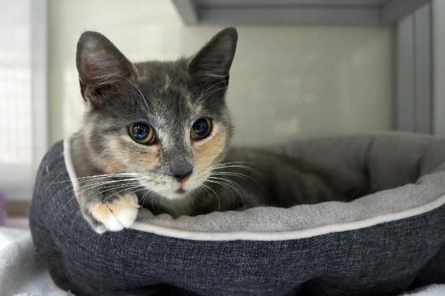 My name at SAFE Haven was Plume and I was adopted!