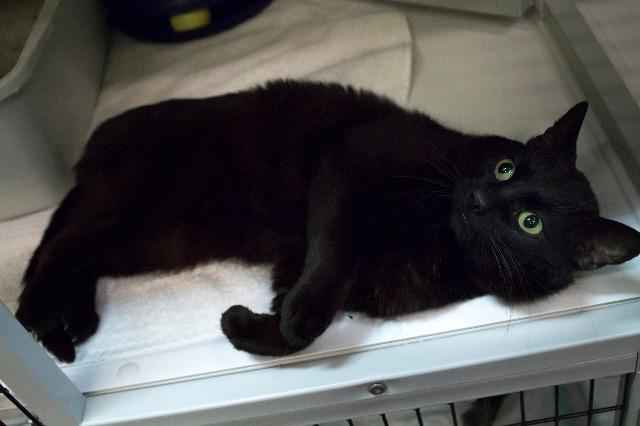 My name at SAFE Haven was Night Ninja and I was adopted!