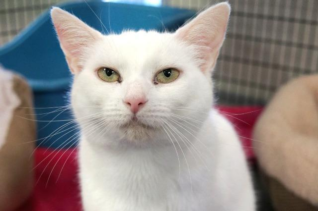 My name at SAFE Haven was Breeze and I was adopted!