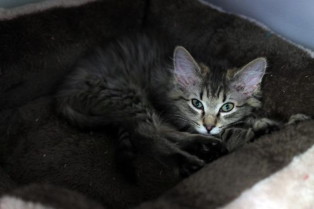 My name at SAFE Haven was Filly and I was adopted!