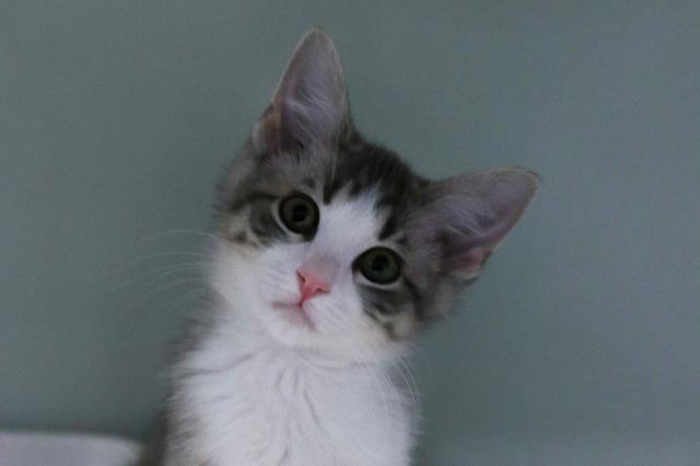 My name at SAFE Haven was Gosling and I was adopted!