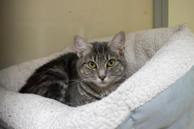 My name is Katana and I am ready for adoption. Learn more about me!