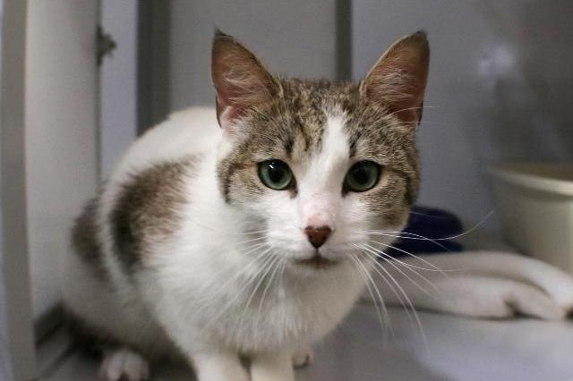 My name at SAFE Haven was Wynchel and I was adopted!