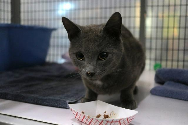 My name at SAFE Haven was Cloudburst and I was adopted!