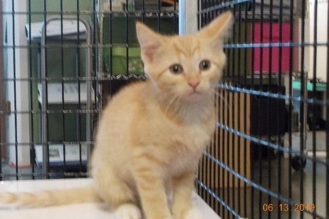 My name at SAFE Haven was Etta James and I was adopted!