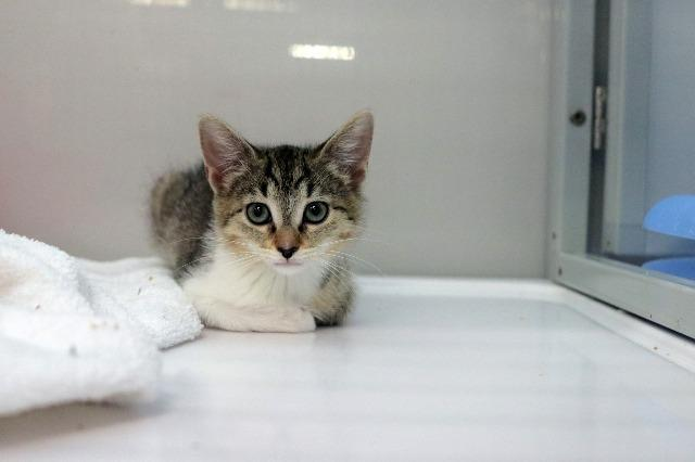 My name at SAFE Haven was Chick and I was adopted!