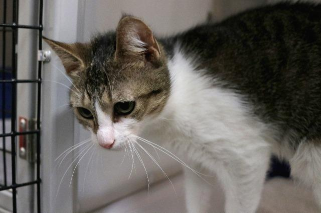 My name at SAFE Haven was C.C. and I was adopted!
