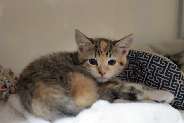 My name at SAFE Haven was Coloratura and I was adopted!