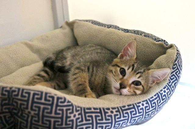 My name at SAFE Haven was Crescendo and I was adopted!