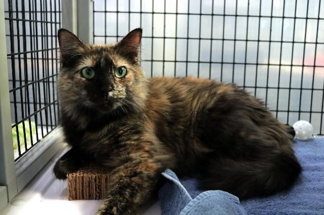 My name is Sparrow and I am ready for adoption. Learn more about me!