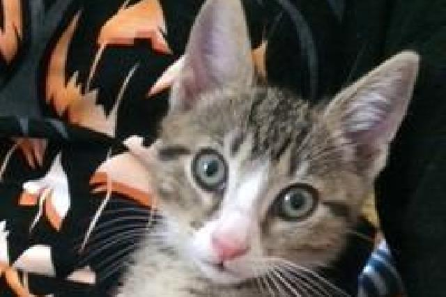 My name at SAFE Haven was Sonny and I was adopted!
