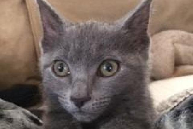 My name at SAFE Haven was Cher and I was adopted!