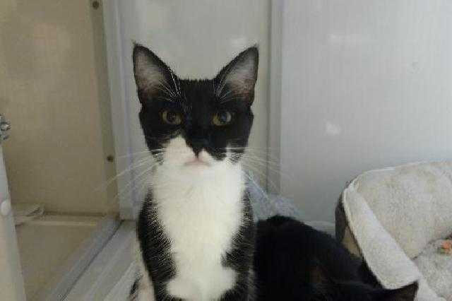 My name at SAFE Haven was Areezo and I was adopted!
