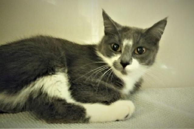 My name at SAFE Haven was Cosenza and I was adopted!