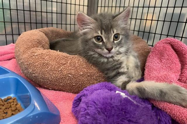 My name at SAFE Haven was Bette Davis and I was adopted!