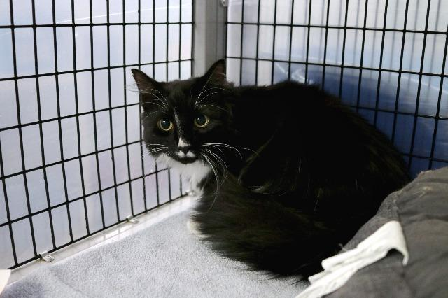 My name is Fermata and I am ready for adoption. Learn more about me!